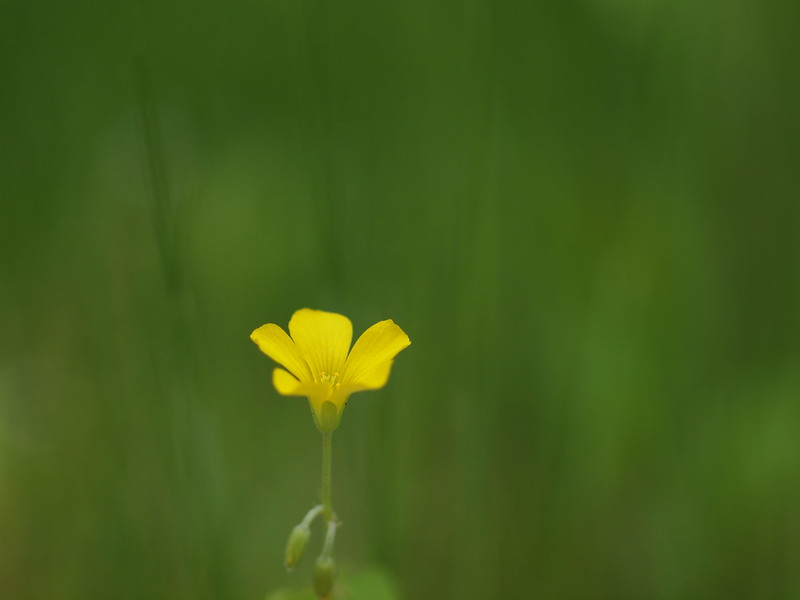 Small Spring Flower