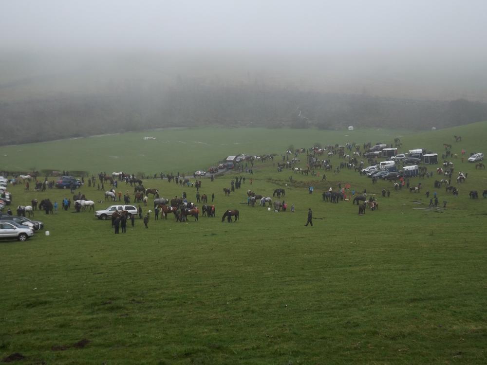 Roberton Field