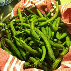 I got this mess 'o' beans for only 2 bucks at Natural Grocers. They are starting to get funky. I think some can be salvaged, though! Wish me luck.