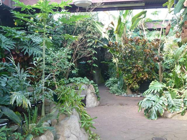 Victoria Butterfly Garden Flickr Photo Sharing