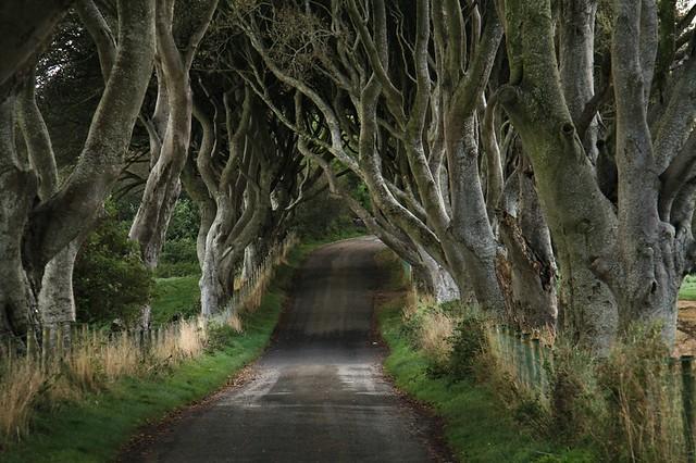 The Dark Hedges, Ballimoney, Northern Ireland