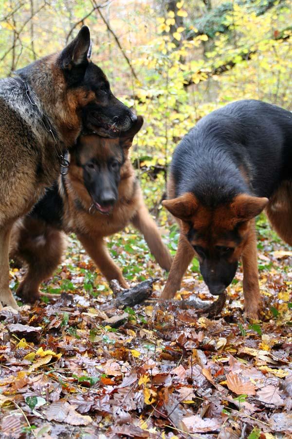 chiens_0030