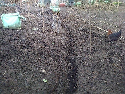 allotment drainage Apr 13 2