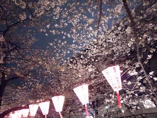 Sakura festival / 目黒川桜まつり