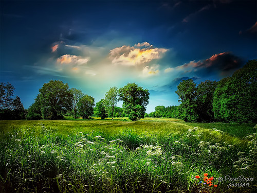 trees shadow sun storm reflection nature water grass leaves birds clouds sunrise way see sonnenuntergang sundown wolken thunderstorm gras sonne blätter sonnenaufgang gewitter weg reflektion unwetter