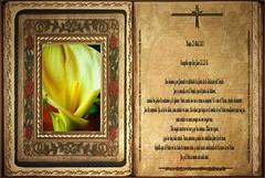Evangelio según San Juan 10,22-30.  Martes 23 Abril 2013