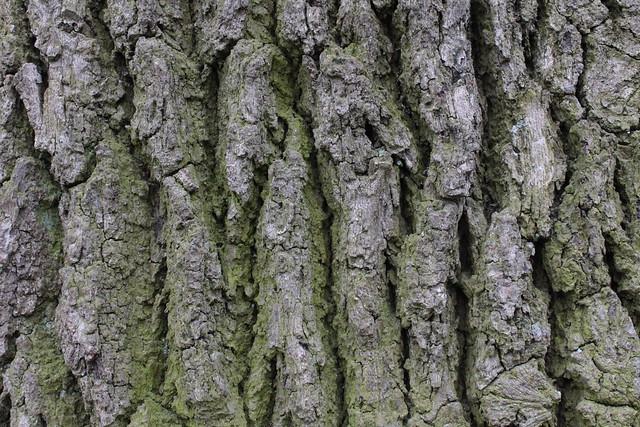 bark pattern