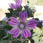 Flower, Parque Del Oeste