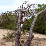 Tree, Guardamar del Segura