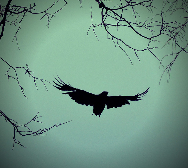 flying crow | E...