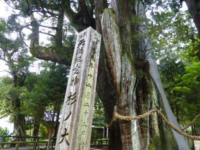 oosugi-2013-4-21-3