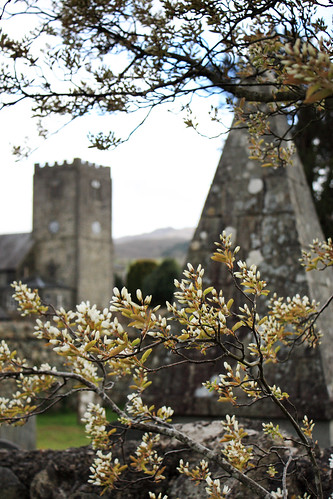 Church and flowering tree