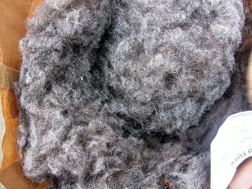Shetland fleece (2)