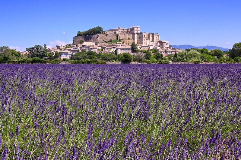 Grignan Castle Lavender Fields 3