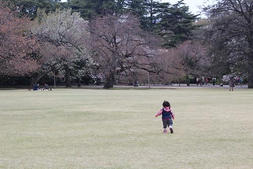 新宿御苑2013_7