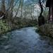Nel bosco incantato by Rossella DG
