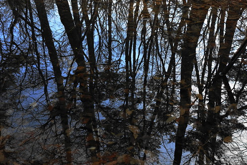 wood trees reflection tree leave nature water leaves woods sony scene surface overlapping rx100
