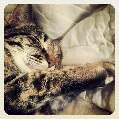 cats are pure peace...#caturday, #tabbycats...