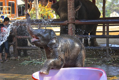 baby elephants just want to have fun