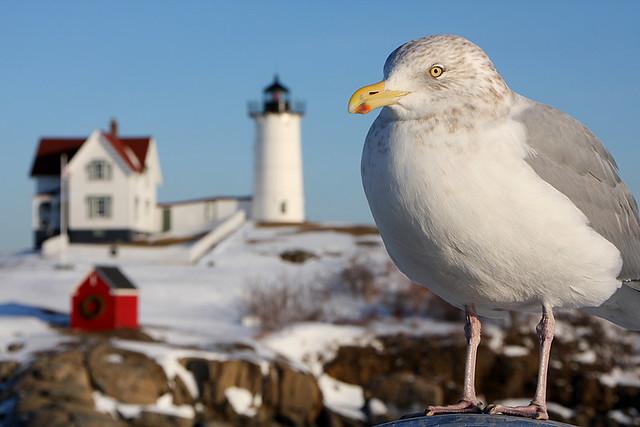 Gull-uble?