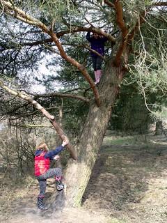 Emily up a tree