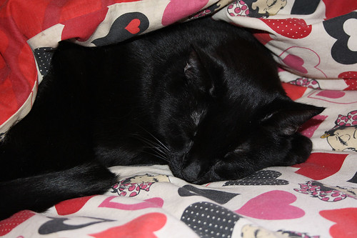 ~ Happy Sleepy Sunday ~ Blacky..