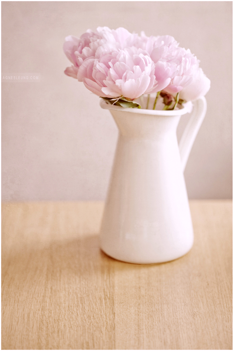 photography-flower-peonies