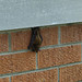 Bat on the front of my house