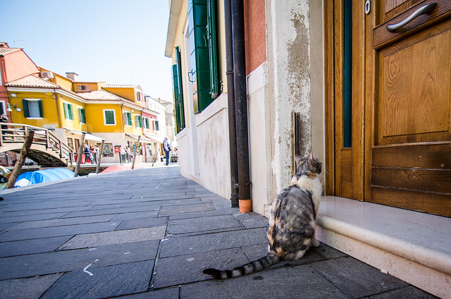 This Burano kitty sure knew where it wanted to be!