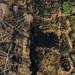 Moor Peat