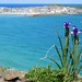 St Ives iris by ExeterAnna