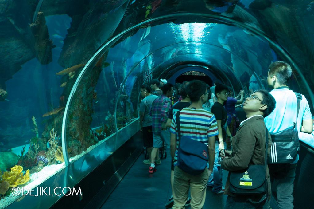 Marine Life Park Singapore - S.E.A. Aquarium - the tube