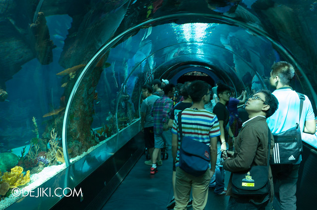 Marine Life Park Singapore - S.E.A. Aquarium - the tube