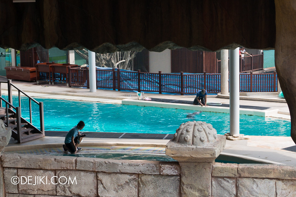 Marine Life Park Singapore - Adventure Cove Waterpark - Dolphins and trainers