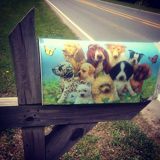May 16 : Mailbox -- I drive by this one everyday... Just two doors down from our house. It belongs to The Doggie Barber #fmsphotoaday #dogs #mailbox