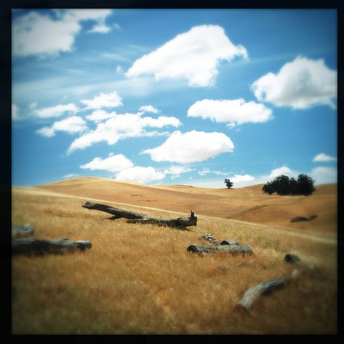 california sky tree clouds square landscape hill logs livermore hollingsworth iphone5 brushypeakregionalpreserve iphoneography hipstamatic oggl uploaded:by=flickrmobile flickriosapp:filter=nofilter