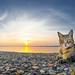 Sunny cat by François DENIEL