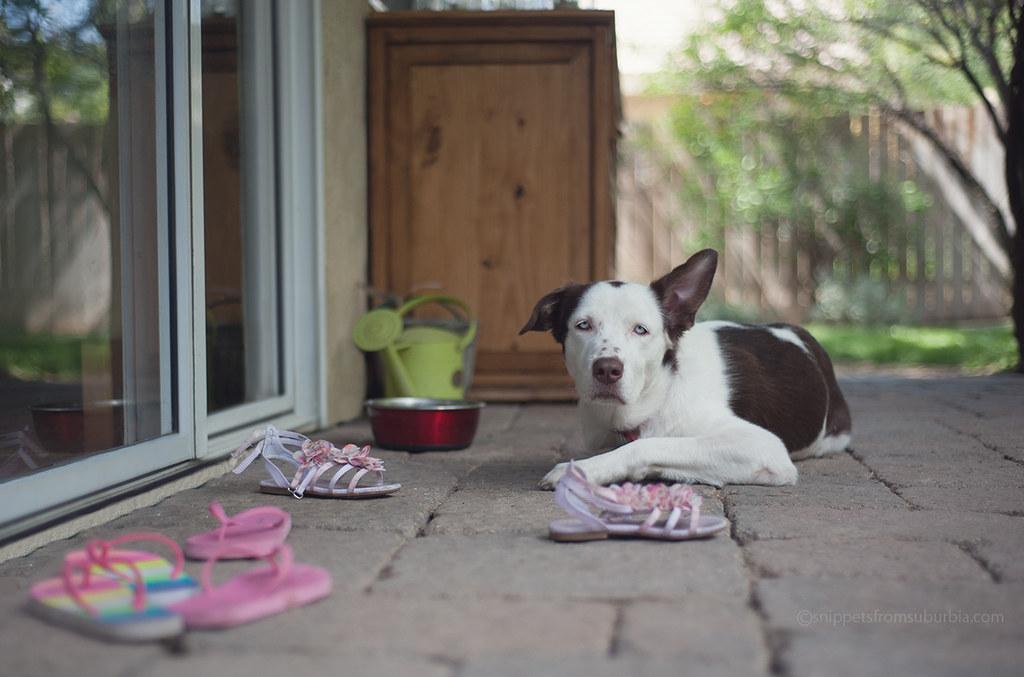 Sasha, keeping the shoe collection company