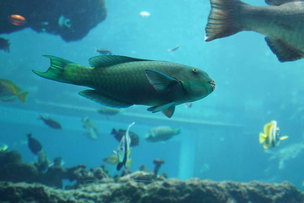 美ら海水族館DSC04575