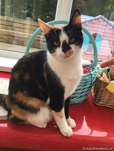 Mon, Oct 3rd, 2016 Lost Female Cat - Beside Peggy's Pubandannaghdown Pitches, Cregg, Claregalway