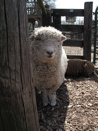 Tanglewood Farm 0043