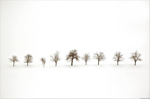 the memory of trees.............in this spring !!!!!!