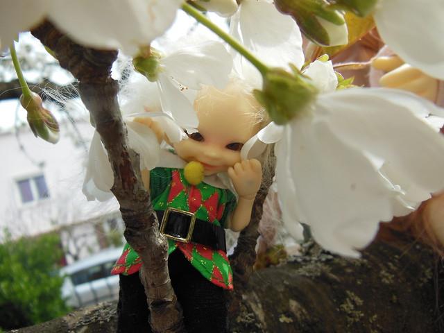 [Toulouse] Résine et fleurs de cerisier 8629651920_9594a5cc2d_z