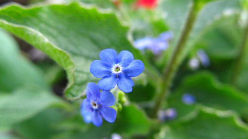 blue flower green beautiful spring fresh blinkagain