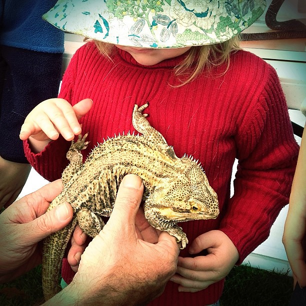 Tiny and a Centralian Bearded Dragon. Cuteness and Awesomeness. || #beardeddragon #unschooling