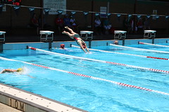 swimming pool(1.0), individual sports(1.0), swimming(1.0), sports(1.0), recreation(1.0), outdoor recreation(1.0), leisure(1.0), swimmer(1.0), water sport(1.0), medley swimming(1.0), freestyle swimming(1.0),