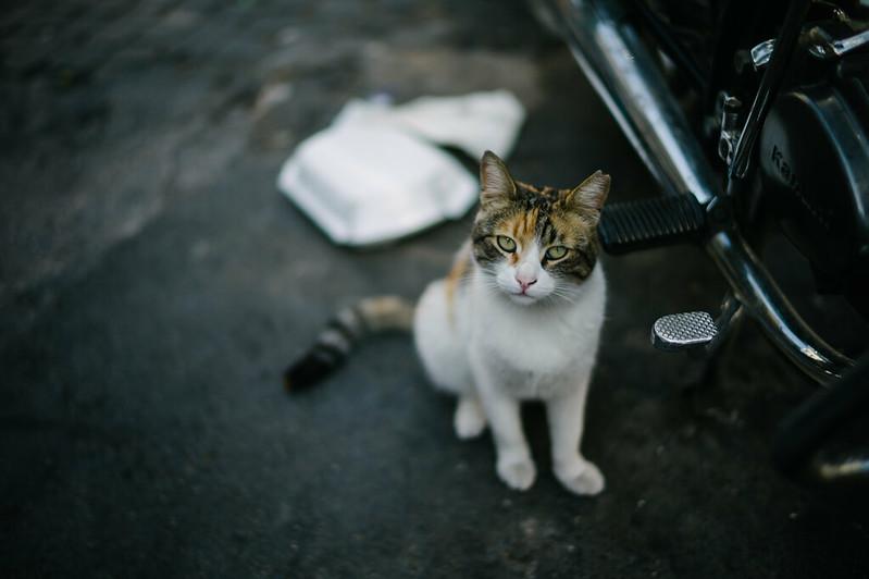 Hello Cat.