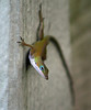 Day 113: Green Anole Looking At Me