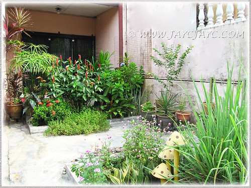 An overview of our tropical garden, captured March 29 2013