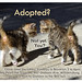 Adopted? by lisacat